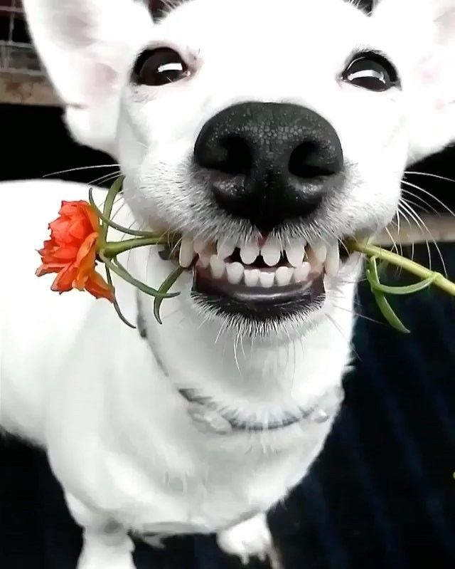 Will you accept this rose?  Video by: @eurosaurus  #AnimalAddicts to be featured!