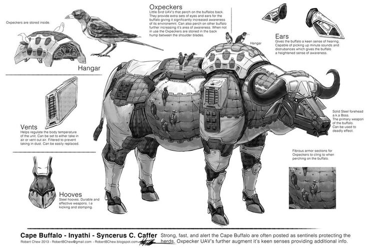 Big Five: Buffalo Breakdown by CrazyAsian1 on DeviantArt