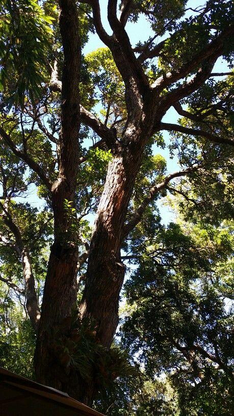 Botanical gardens Stellenbosch 2014