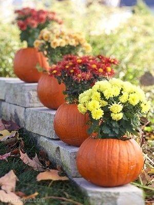 Pumpkin Planters flowers autumn fall decorate pumpkin halloween thanksgiving planters mums