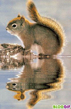 Un petit écureuil !!