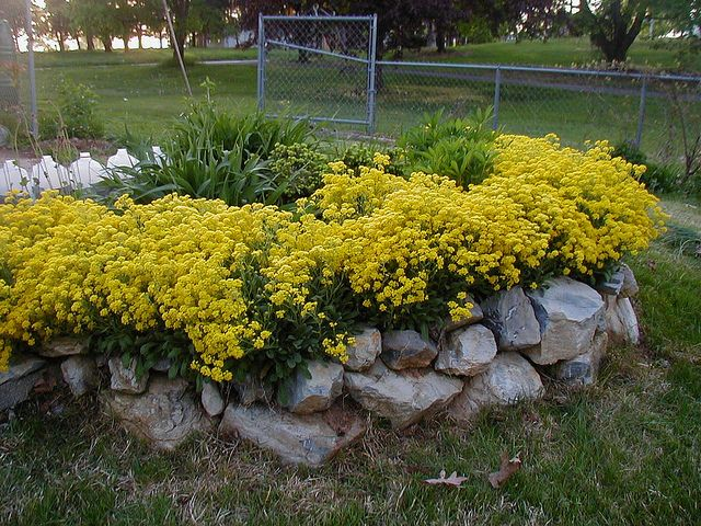 100 ideas to try about trailing cascading spiller plants for Retaining wall plants landscaping