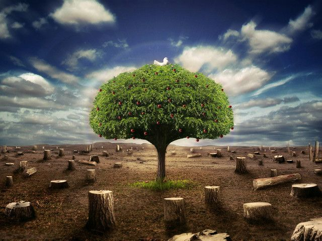 15 Beautiful High Resolution Desktop Wallpapers Tree Of Life Artwork Nature Save Trees