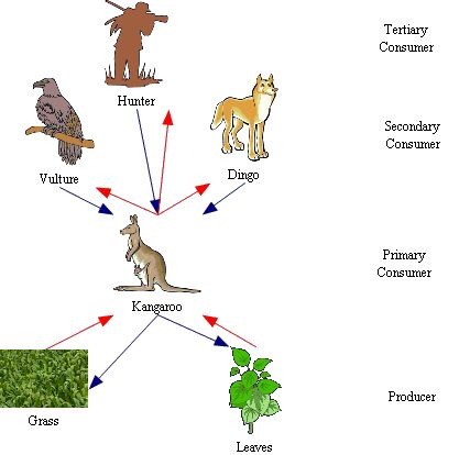 Feral Cats Large Food Web