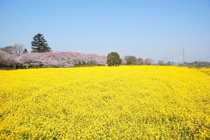 日本の春 風景 - Google 検索
