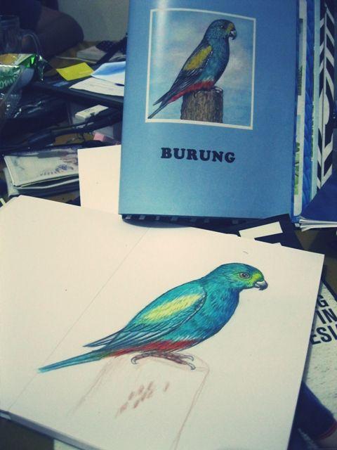 Pencil color Bird Illustration