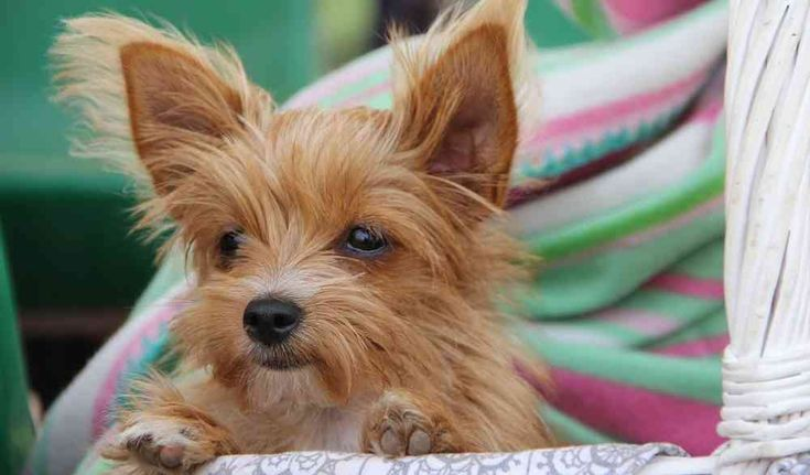 The most adorable dogs of all are the cute small dog breeds, which could melt the hardest of hearts. Here's a list of the very cutest small fluffy dogs: http://smallfluffydogbreeds.com/cute-small-dog-breeds/