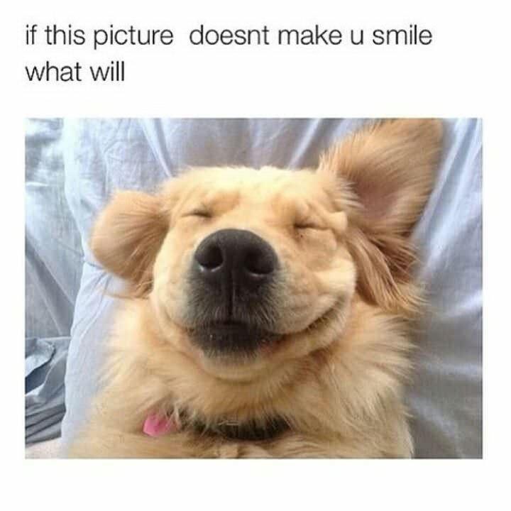 That famous Golden Retriever puppy smile