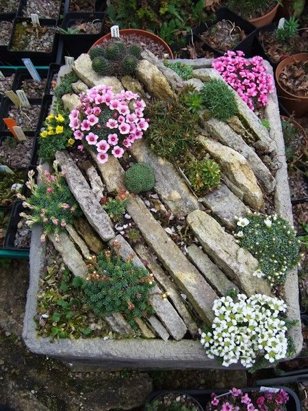 Make a rock garden! 20 beautiful examples (VIDEO)