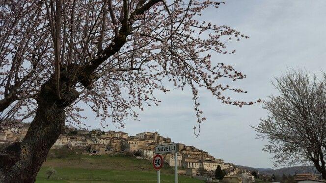 Beautiful Navelli behind the almond tree in blossom  La nostra bella Navelli incorniciata dalla fioritura dei mandorli #Abruzzo #travel #italy #navelli #abruzzosegreto #abruzzen #zafferano #saffron #borghi