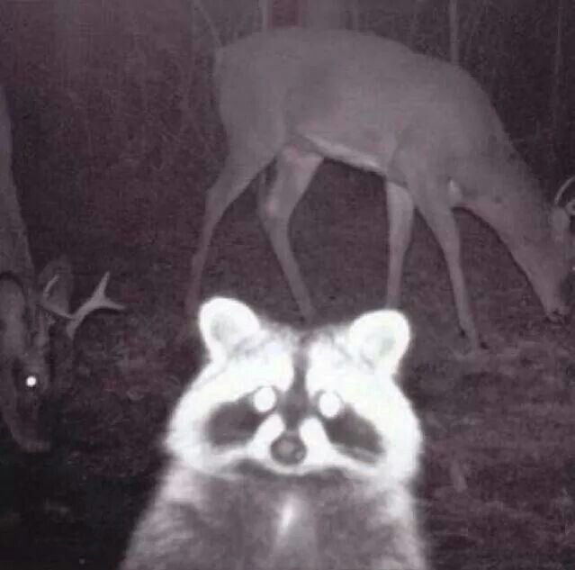 Best trail cam photo bomb..... EVER! #huntinghumor #Fridayfunnies