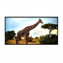 120 Inch 16:9 Collapsible White Portable Projector Screen