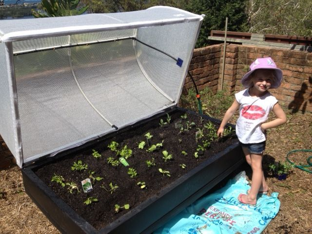 VegePod Australia - I really want one of these. Michelle this might be handy for you too!