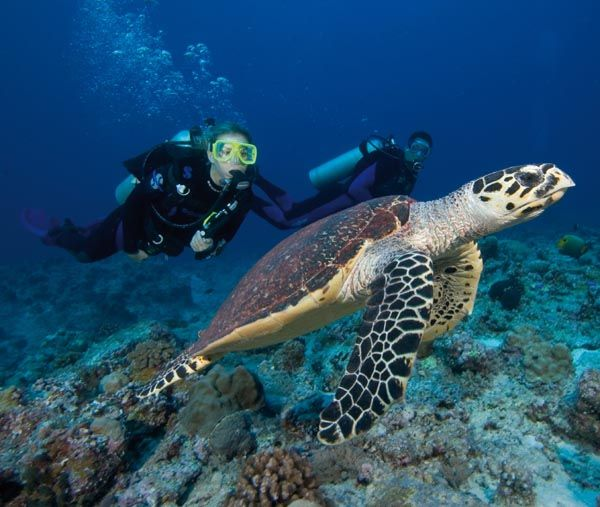 Scuba diving with turtles!!