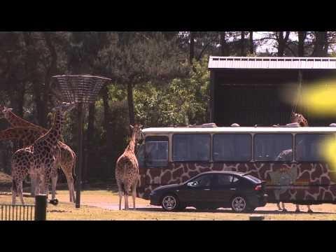 Safaripark Beekse Bergen – uitstapjes review