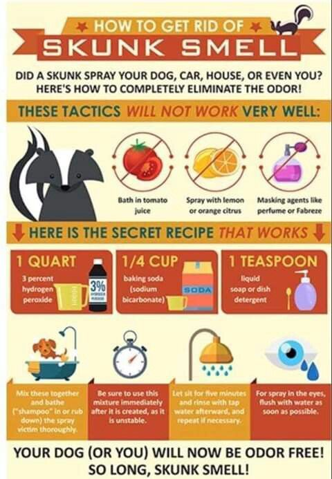 How To Get Rid Of Skunk Smell Skunk Smell Getting Rid Of Skunks Skunk Smell Remover