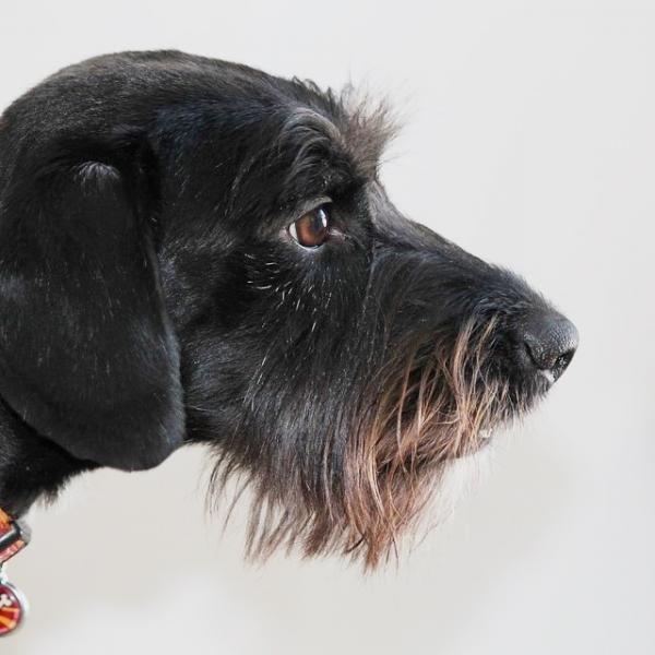 ¿Cuánto vive un perro sin raza? - ExpertoAnimal