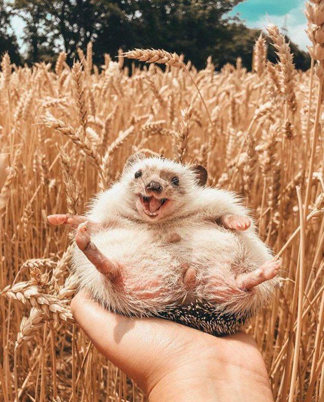 happy hedgehog, mr pokee – Natalie Wood