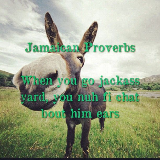 Jamaican Good Morning Meme : Best images about jamaican sayings on pinterest