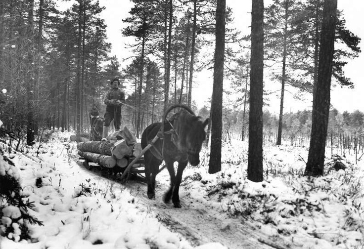 Extraction of logs by Finnish horse and sledge. Snow and frost lowered the costs of extraction but it was hard manual work in freezing cold. There was a long tradition of using ice roads in Winter.