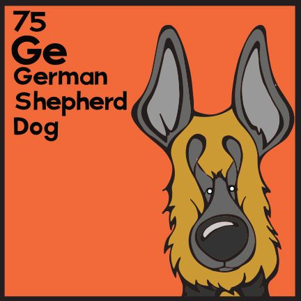 So today we take a break from our regularly scheduled Dog of the Day to revisit the German Shepherd in honor of Rumor, the German Shepherd that won Best in Show at the Westminster Dog Show 2017. The 75th Elemutt of The Dog Table is the German Shepherd. The Dog Table Poster features illustrations of 186 dog breeds. Dogs are organized in a similar layout and structure to the Periodic Table. #dogsofpinterest #GermanShepherd #WKCDogShow #WestminsterDogShow #bestinshow BUY THE DOG TABLE POSTER