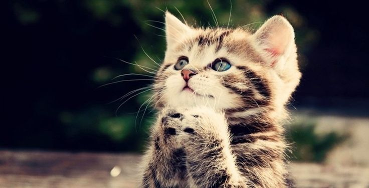 katten-kattenbak-kat-poes-tips-geur-budgi