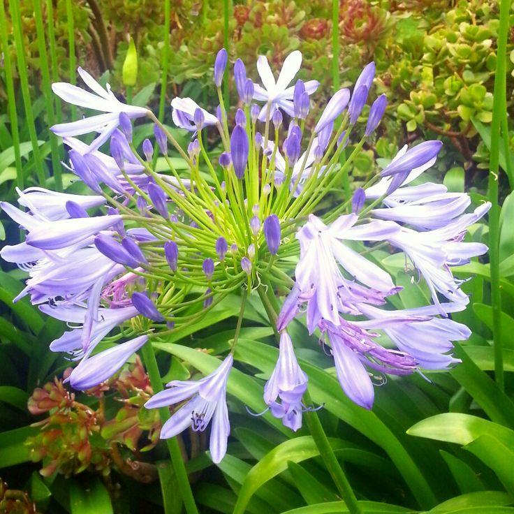 Purple flower #spring