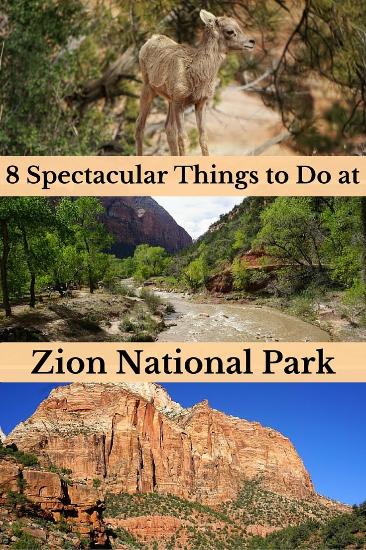 8 Spectacular Things to Do at Zion National Park