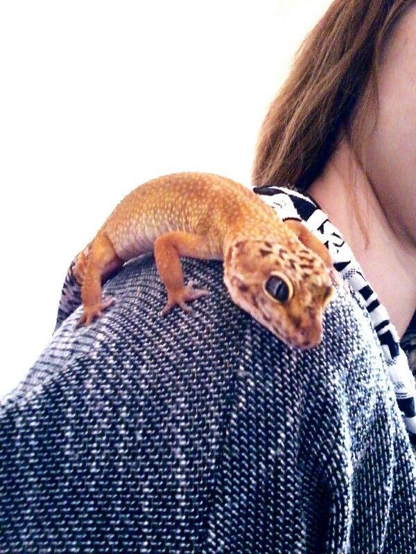 Leopard gecko morph <3