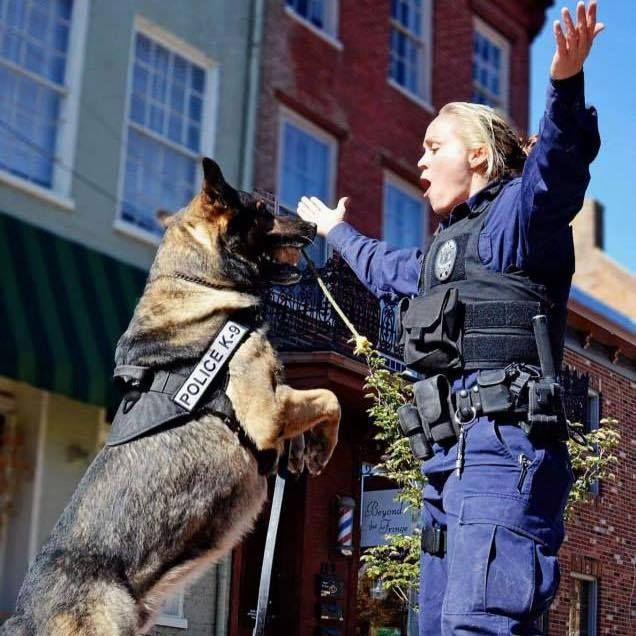 K9 Kota & Officer Neer from Winchester, VA. Kota was AHS Law Enforcement Dog of the Year. After falling through an attic/ceiling & breaking bones, he went back upstairs to finish apprehending the suspect! He's doing great now! This picture won them the Female K9 Handlers photo contest.