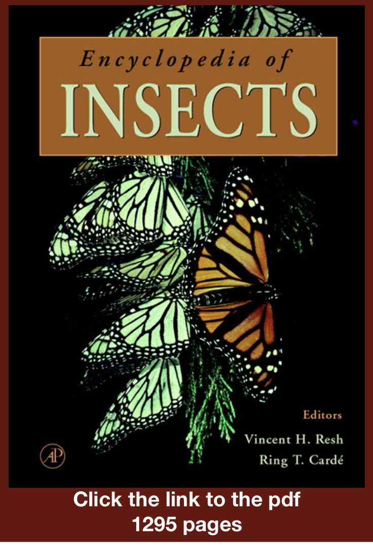Freeencyclopedia of insects click the link to download
