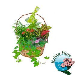 #Ciotola di piante raffinata. consegna in  ad Euro 50.00 in #Fiori #Casa e giardino