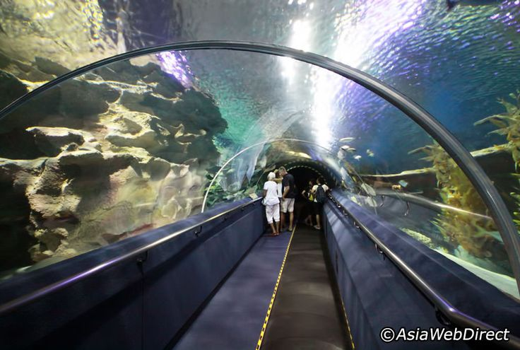 Aquaria KLCC located on the concourse level of the Kuala Lumpur Convention Centre, the 5000sqft Aquaria KLCC is said to be largest aquarium in the world. Home to over 150 species of marine life, its star attractions include scary tiger sharks, lethal sea snakes, blue rays, bright