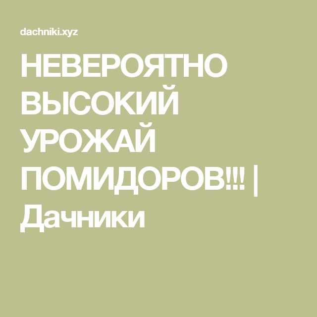 НЕВЕРОЯТНО ВЫСОКИЙ УРОЖАЙ ПОМИДОРОВ!!! | Дачники