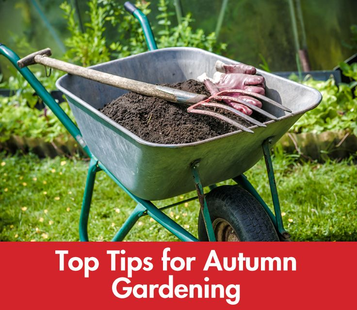 #Autumn is the perfect time to get stuck into your #garden. Before the winter weather forces us back indoors, there's a lot of groundwork you can do now so that your #garden flourishes in spring