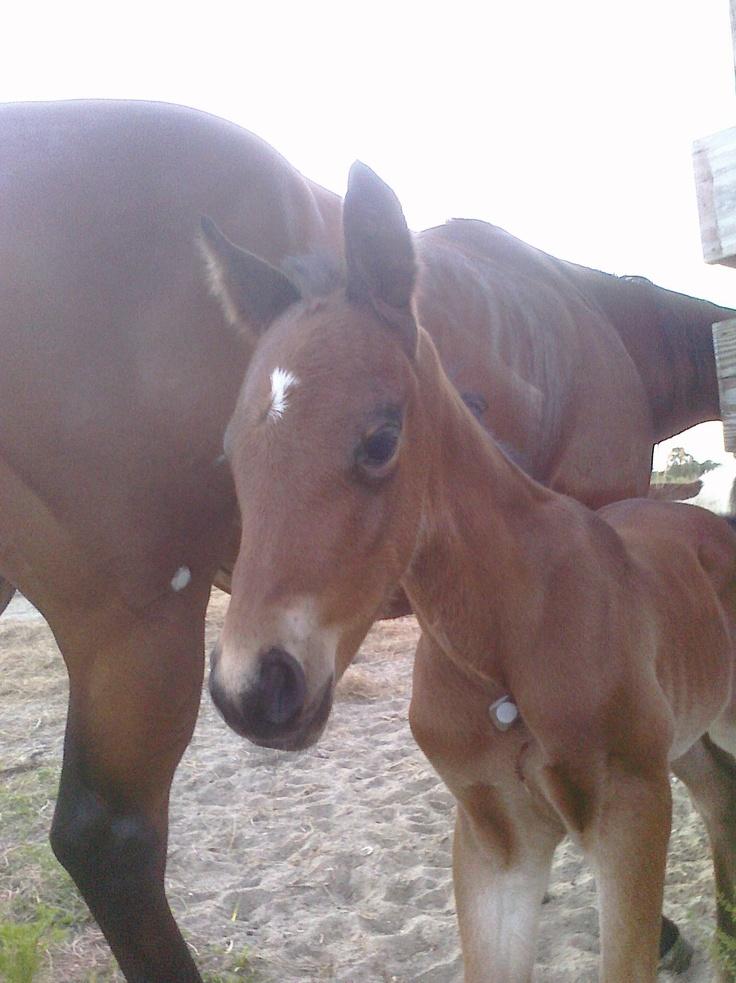 #horses #horsetreatment #painrelief