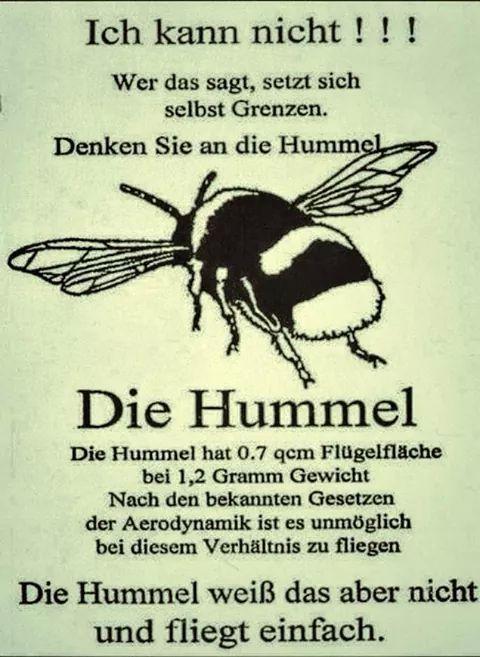 funpot: die Hummel.jpg von Renilinz