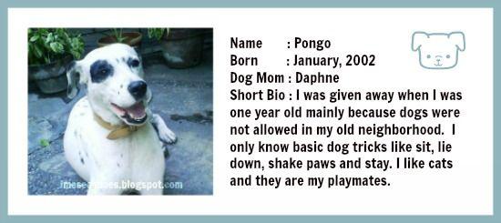 Pongo profile