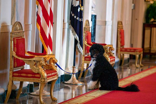 <b>The DOTUS (Dog of The United States) turned 4 yesterday!</b> Let's see how he celebrated.
