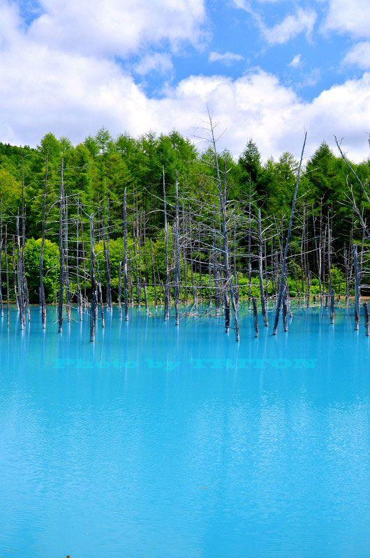 神秘の池… 青い池 : いつかどこかで…