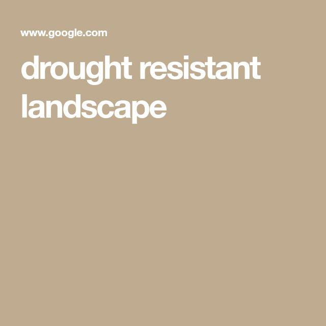 drought resistant landscape