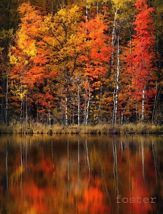 1000 Ideas About Fall Tree Painting On Pinterest