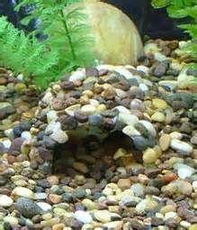 Cichlids Caves - Bing Images