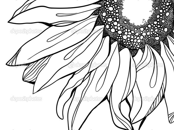 free black and white clip art sunflowers - photo #42