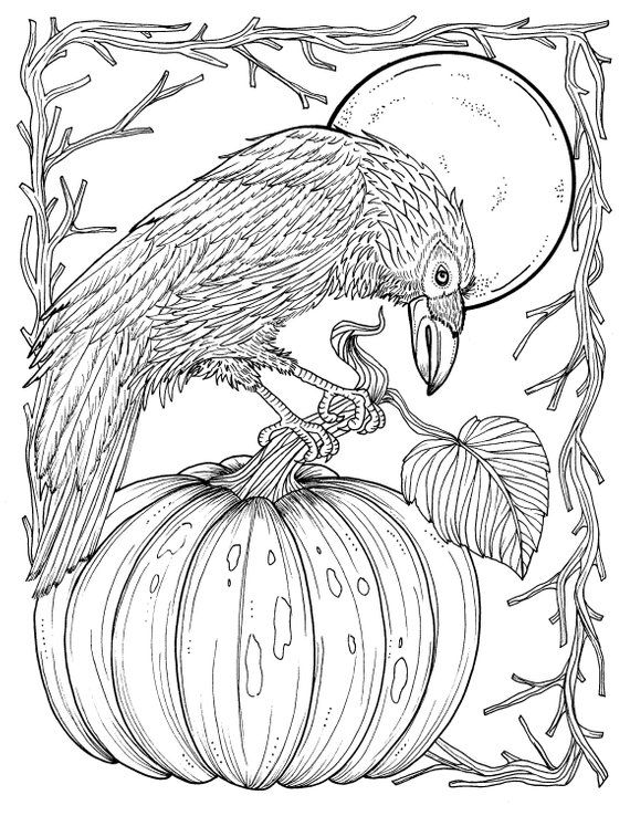 Fall Crow Digital Coloring Page Thanksgiving Harvest