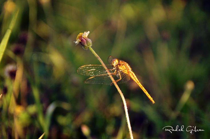 Butterfly by Radek Gibran