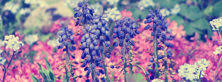 Floral Facebook Covers: Purple Flowers {Flowers Facebook Timeline Cover Picture