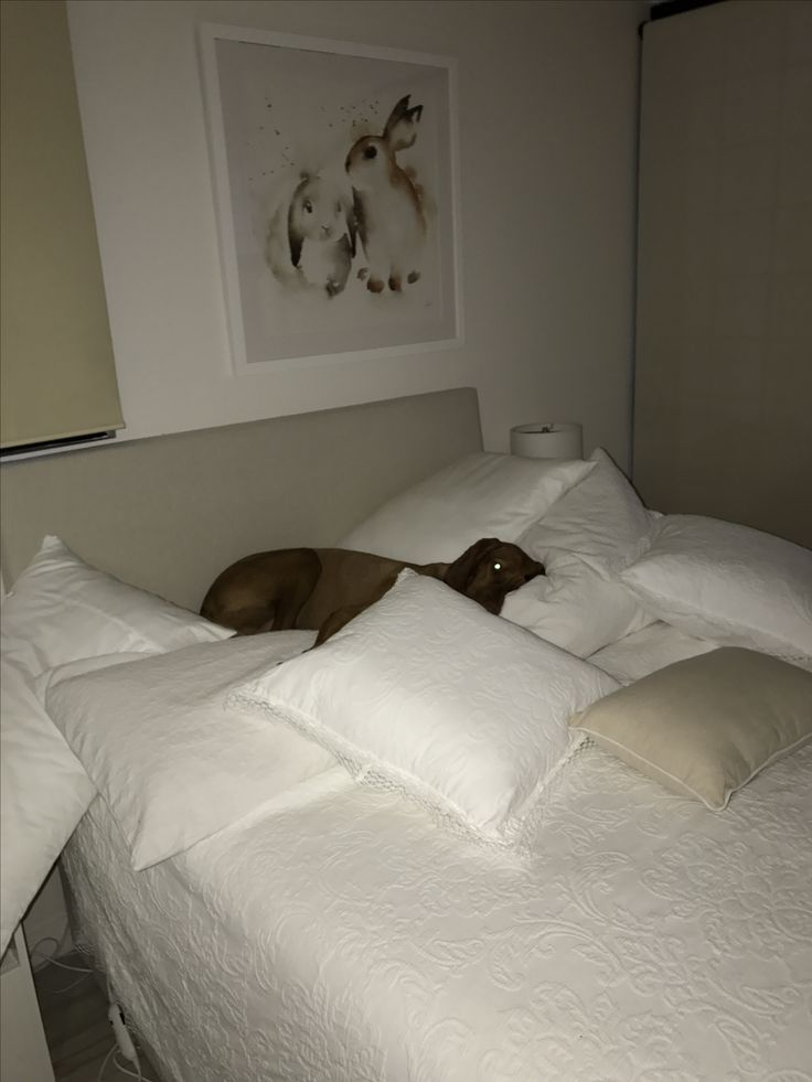 In the middle of the night he sneaks to the spare bedroom and enjoys the pillows.  Hedges and the pillows.