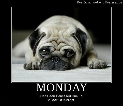 Happy Monday Quotes For Work: Happy Monday! Cute Pug! Www.OlympianPet.com