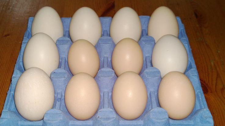 Sarja munia vai munasarja. Homemade lähiruokaa.